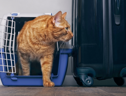 Pets on Plane, Yes, or No?
